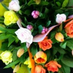 bright coloured flowers